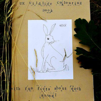 Sarah Lovell UK Wildlife colouring book