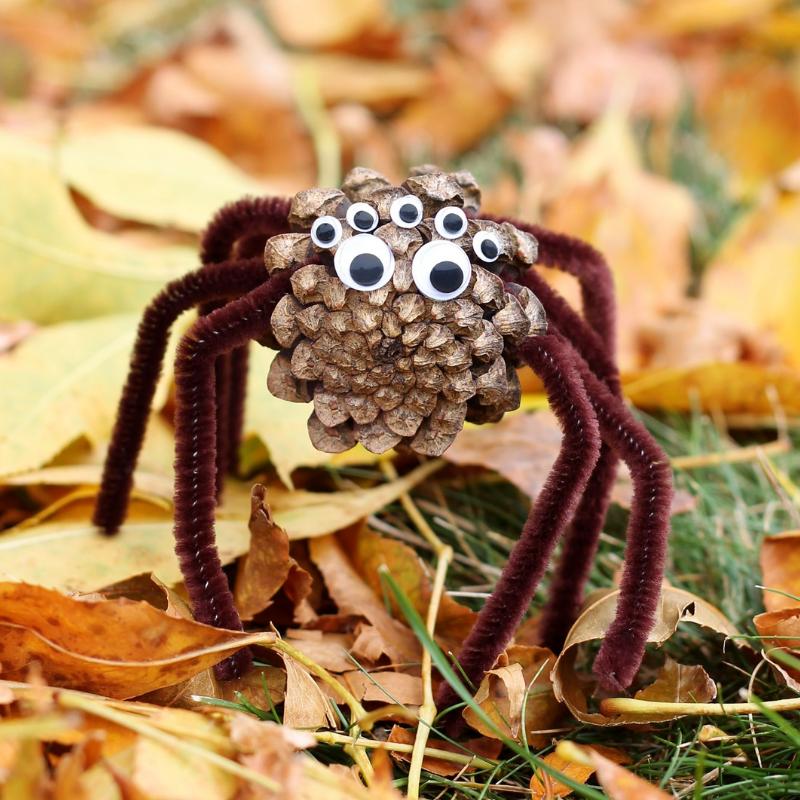 Pinecone spider