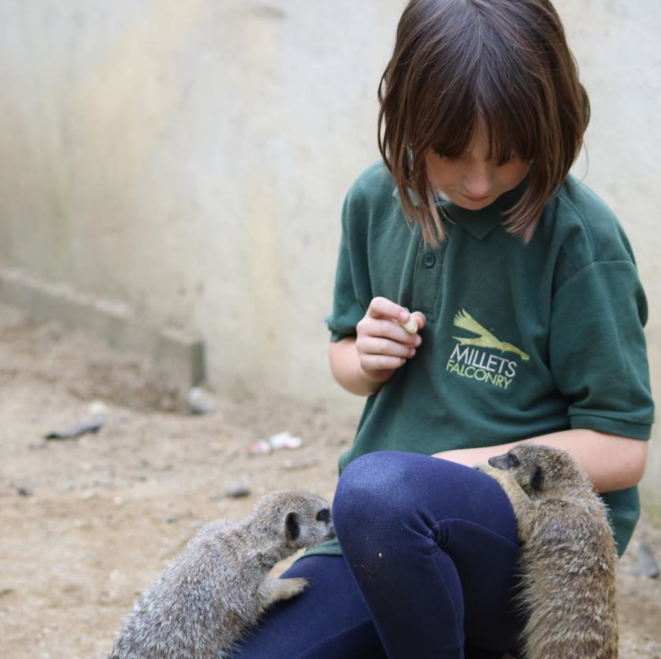 Junior Zoo Keeper for a Day, £89, Millets Falconry Centre (Oxfordshire)